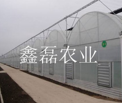 薄膜連棟溫室