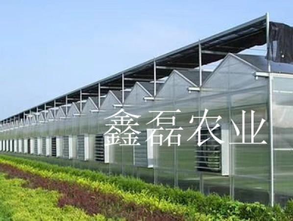 陽光板溫室